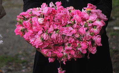 AFGHANISTAN-Nangarhar-LESE-ROSE PETALS