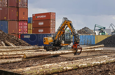 Holzverladung  Hafen Koeln Niehl  Container am Containerterminal  Nordrhein-Westfalen  Deutschland  Europa
