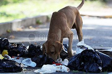 Lagodechi  Georgien  streunender Hund sucht auf einer vermuellten Strasse nach Nahrung
