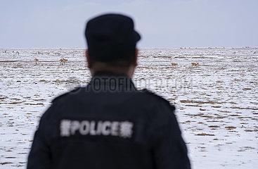 (CHINA BIODIVERSITY) CHINA-QINGHAI-Hohxil-ENVIRONMENTAL PROTECTION-FÖRSTER (CN) (CHINA BIODIVERSITY) CHINA-QINGHAI-Hohxil-ENVIRONMENTAL PROTECTION-FÖRSTER (CN)