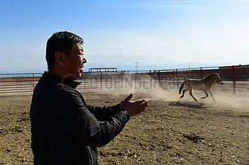 CHINA-XINJIANG-Jimsar-Przewalskipferde-Breeding and Research Center-Personal (CN) CHINA-XINJIANG-Jimsar-Przewalskipferde-Breeding and Research Center-Personal (CN) CHINA-XINJIANG-Jimsar-Przewalskipferde Zucht und RESEARCH CENTER- Personal (CN) CHINA-XINJIANG-Jimsar-Przewalskipferde-Breeding and Research Center-Personal (CN) CHINA-XINJIANG-Jimsar-Przewalskipferde-Breeding and Research Center-Personal (CN) CHINA-XINJIANG-Jimsar-Przewalskipferde-Breeding AND RESEARCH CENTER-Personal (CN) CHINA-XINJIANG-Jimsar-Przewalskipferde-Breeding and Research Center-Personal (CN) CHINA-XINJIANG-Jimsar-Przewalskipferde-Breeding and Research Center-Personal (CN) CHINA-XINJIANG-JIMSAR- Przewalskipferde-Breeding and Research Center-Personal (CN) CHINA-XINJIANG-Jimsar-Przewalskipferde-Breeding and Research Center-Personal (CN) CHINA-XINJIANG-Jimsar-Przewalskipferde-Breeding and Research Center-Personal (CN) CHINA- XINJIANG-Jimsar-Przewalskipferde-Zucht- und RESEARCH CENTER-Personal (CN) CHINA-XINJIANG-J IMSAR-Przewalskipferde-Breeding and Research Center-Personal (CN) CHINA-XINJIANG-Jimsar-Przewalskipferde-Breeding and Research Center-Personal (CN)