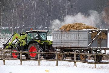 Gestuet Goerlsdorf  Traktor zieht im Winter einen Anhaenger mit dampfendem Pferdemist