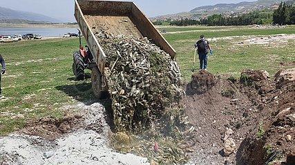 LIBANON-UMWELTVERSCHMUTZUNG SEE-Fischtod