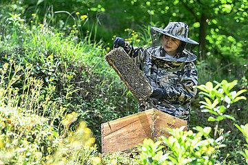 CHINA-GUIZHOU-GUIYANG-YOUTH-BEE BREEDING (CN)