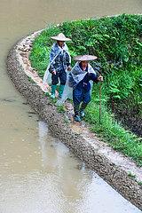 CHINA-GUIZHOU-Congjiang-REIHEN FIELDS-Zucht (CN)