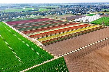 Buntes Tulpenfeld am Niederrhein  Luftaufnahme | Colorful tulip field on the Lower Rhine  aerial photo
