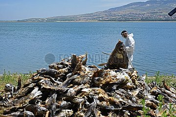 LEBANON-LAKE-FISH DEATH