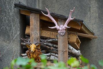 Berlin  Deutschland - Hirschgeweihe an einem Holzunterstand
