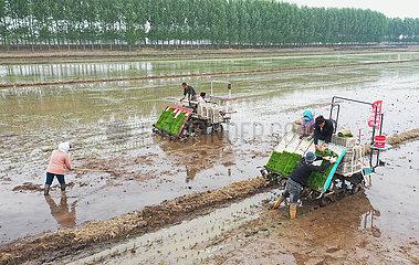 CHINA-HEBEI-TANGSHAN-FARMING (CN)