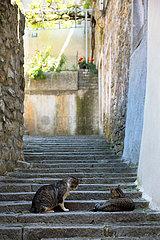 Kroatien  Labin - das malerische  altertuemliche Bergstaedtchen Labin  Katzen auf einer Treppe