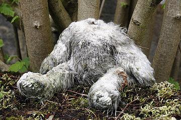 Dranse  Deutschland  Teddybaer ohne Kopf liegt in einem Wald