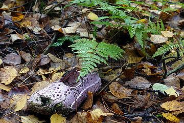 Dranse  Deutschland  Schuh aus Kunststoff liegt in einem Wald im Gebuesch