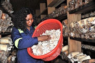 GHANA-ACCRA-MUSHROOM-INDUSTRY