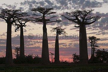 AFRICA-BIODIVERSITY-PFLANZEN