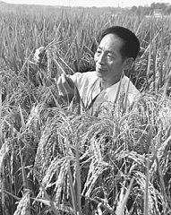 CHINA-YUAN Longping-Vater von Hybridreis-TOD (CN)