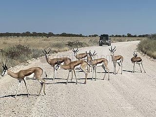 NAMIBIA-WINDHOEK-Etoscha-Nationalpark-ANIMAL