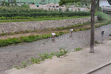 Kaesong  Nordkorea  Einheimische suchen in einem flachen Fluss nach essbaren Krebsen