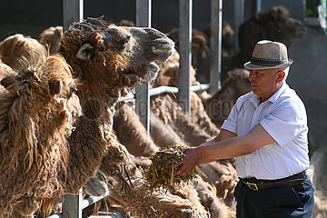 CHINA-XINJIANG-ILI-Tierhaltung (CN)