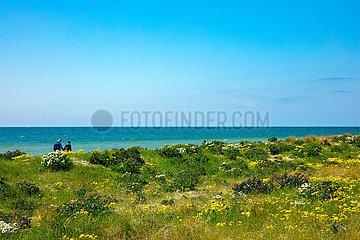 Ostseeinsel Fehmarn  Naturstand am Flügger Leuchtturm