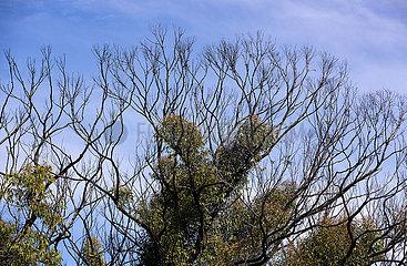 AUSTRALIEN-WILDFIRE-BUSH-REGENERATION