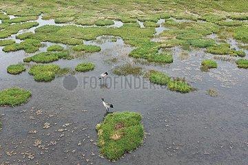 CHINA-GANSU-Gahai LAKE-ÖKOSYSTEM-Zugvögeln (CN)