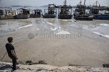 TÜRKEI-ISTANBUL- 'SEA SNOT' -INVADING