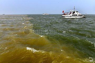 Xinhua Schlagzeilen: Dividenden fließen aus ökologischen Verbesserung entlang des Gelben Flusses