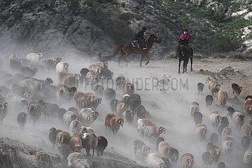 CHINA-XINJIANG-ALTAY-SUMMER PASTURE (CN)