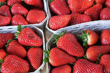 Deutschland  Bremen - Erdbeeren  Auslage Obst- und Gemuesegeschaeft