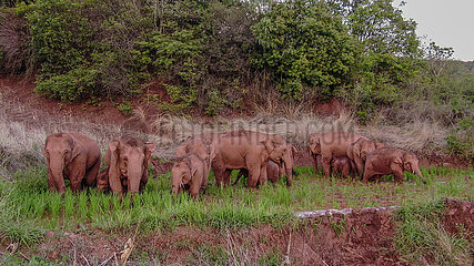 CHINA-YUNNAN-KUNMING-Elefantenherde (CN)