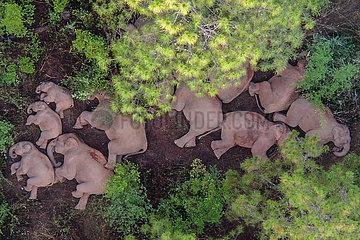 CHINA-YUNNAN-Yuxi-Asiatischen Elefantenherde (CN)