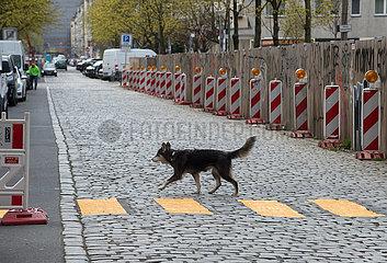 Berlin  Deutschland - Hund beim Ueberqueren einer Strasse.