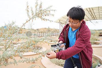 Xinhua Schlagzeilen: chinesische Erfahrung in der Wüste Kontrolle hilft Grün der Welt