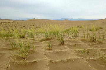 CHINA-GANSU-Linze-ökologisches Umfeld (CN)