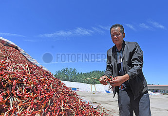 CHINA-TIANJIN-PEPPERS-PLANTING (CN)