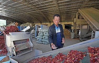 CHINA-TIANJIN-PFEFFERN Begrünung (CN)