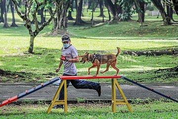 THE PHILIPPINES-MANILA-STRAY DOGS-TRAINING