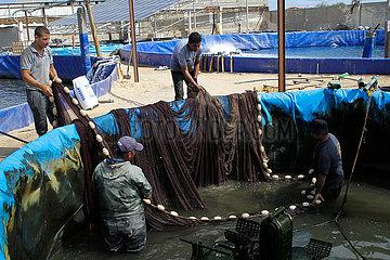 MIDEAST-GAZA-FISH FARM-LOSS