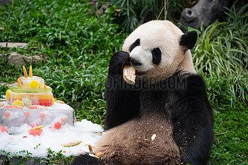 CHINA-MACAO-PANDA-Geburtstag (CN)