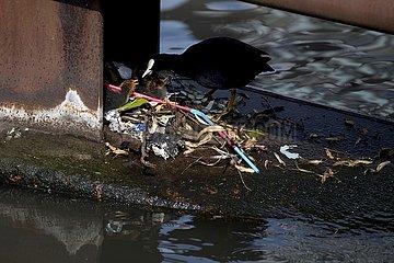 Natur  Umweltverschmutzung
