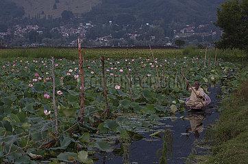 Kaschmir-Srinagar-Dal-See