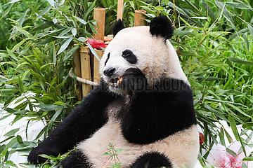 Deutschland-Berlin-Twin Riesige Pandas-Geburtstag