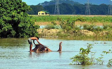 Indien-Assam-Elephant-Bath India-Assam-Elephant-Bath