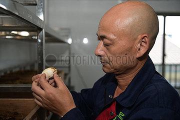 China-Anhui-chinesische Alligator-künstliche Zucht (CN)