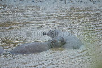 Kenya-Maasai Mara National Reserve-wilde Tiere