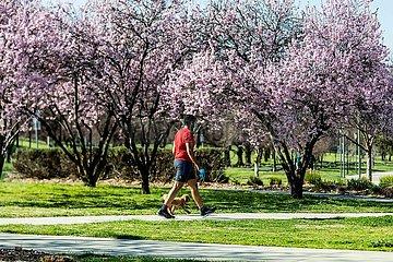 Australien-Canberra-Frühlingsblüten-Covid-19-Lockdown
