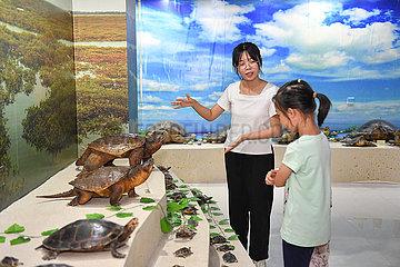 China-Hainan-Haikou-Turtle-Protektoren (CN)