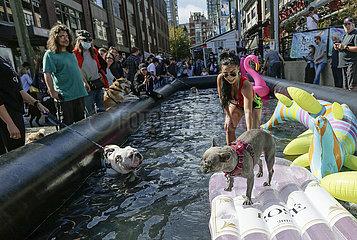 Kanada-Vancouver-Pet-Event