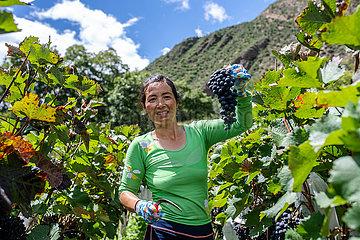 China-Yunnan-deqin-Trauben (CN)