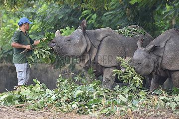 Indien-Assam-Guwahati-Zoo